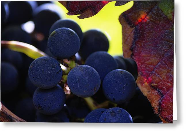 Grape Vines Greeting Cards - Close up of Grapes on a Vine Greeting Card by Nomad Art And  Design