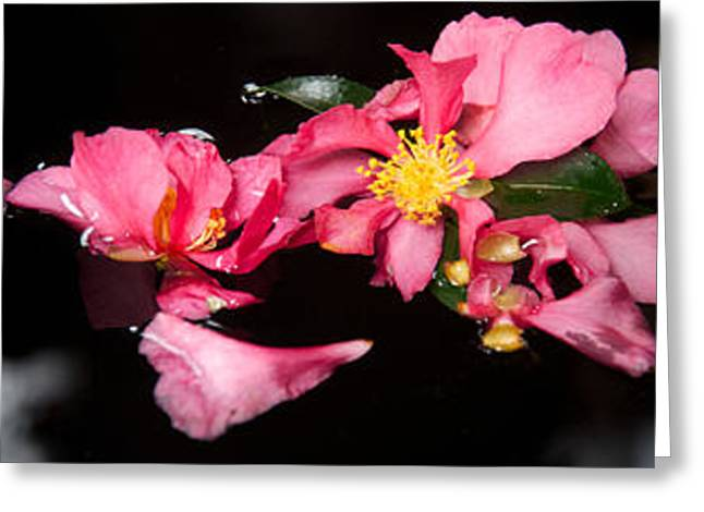 Close-up Of Pink Flowers Greeting Card by Panoramic Images