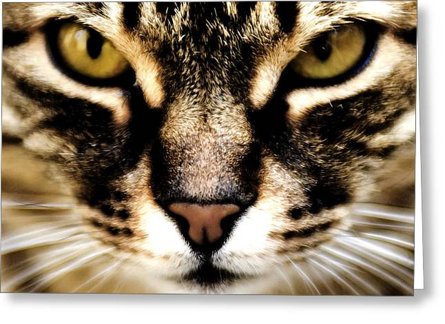 Mackerel Greeting Cards - Close up shot of a cat Greeting Card by Fabrizio Troiani