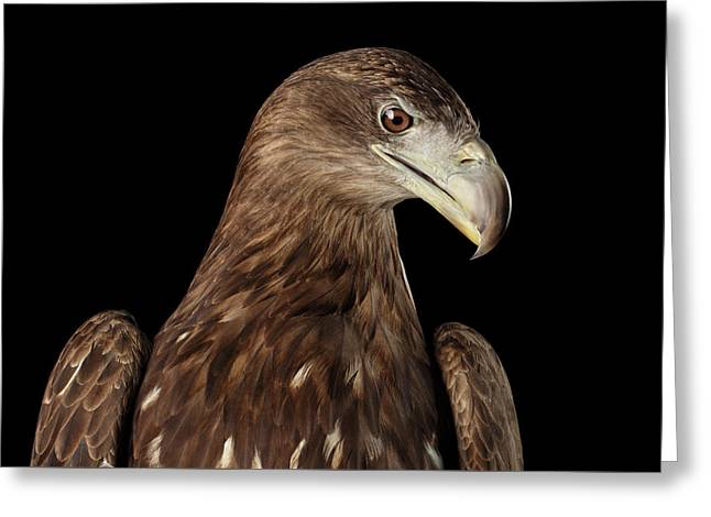 Close-up White-tailed Eagle, Birds Of Prey Isolated On Black Bac Greeting Card by Sergey Taran