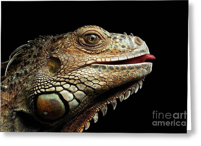 Close-upgreen Iguana Isolated On Black Background Greeting Card by Sergey Taran