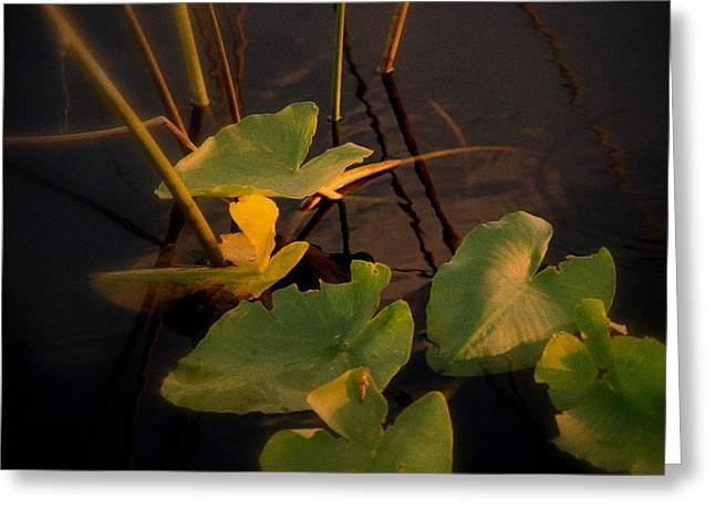 Abstract Flowers And Leaves Greeting Cards - Closer Greeting Card by Susanne Van Hulst