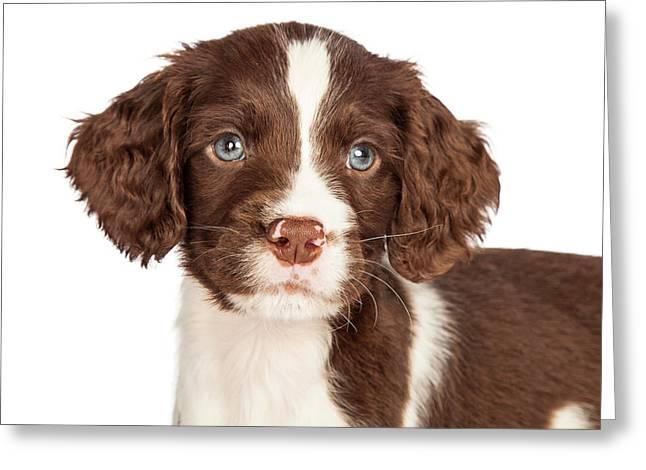 Closeup English Springer Spaniel Puppy Greeting Card by Susan  Schmitz