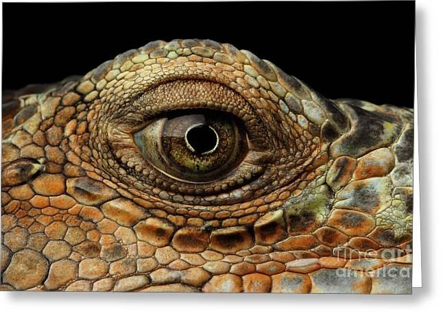Closeup Eye Of Green Iguana, Looks Like A Dragon Greeting Card by Sergey Taran