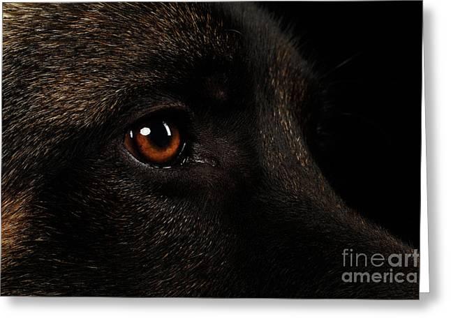 Closeup Eyes Of German Shepherd On Black Greeting Card by Sergey Taran