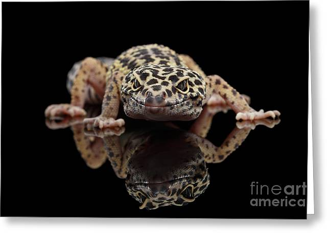 Closeup Leopard Gecko Eublepharis Macularius Isolated On Black Background, Front View Greeting Card by Sergey Taran