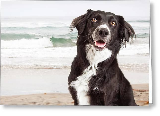 Closeup Of Happy Dog At Beach Greeting Card by Susan Schmitz