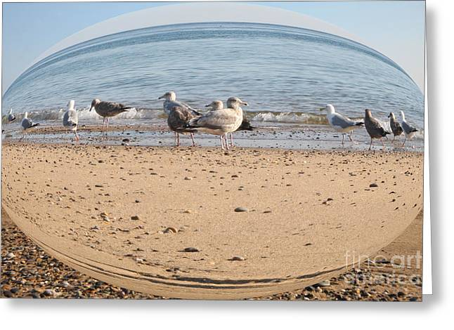 Abstract Beach Landscape Greeting Cards - Closeup of seagulls Greeting Card by Brian Flannery