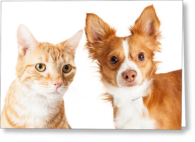 Closeup Small Dog And Tabby Cat Greeting Card by Susan Schmitz