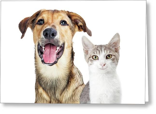 Closeup Young Attentive Gey Cat Greeting Card by Susan Schmitz