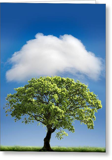 Blue Green Greeting Cards - Cloud Cover Greeting Card by Mal Bray