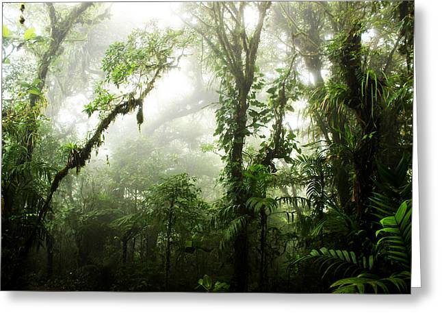 Rainforest Greeting Cards - Cloud Forest Greeting Card by Nicklas Gustafsson