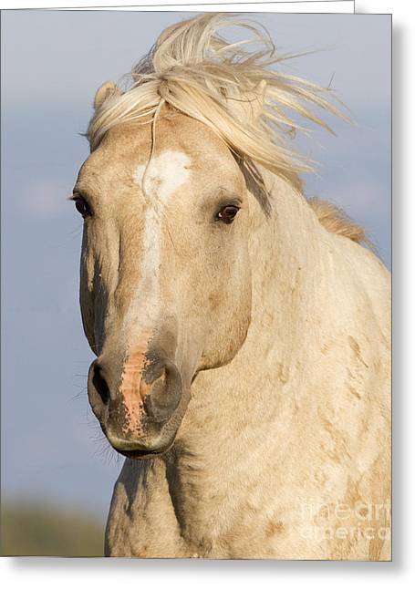 Wild Horses Greeting Cards - Cloud Runs Close Greeting Card by Carol Walker