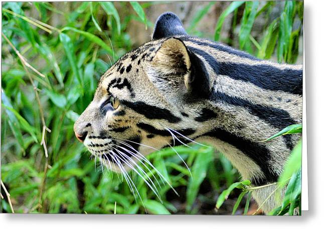 Clouded Leopard In The Grass Greeting Card by Kristin Elmquist