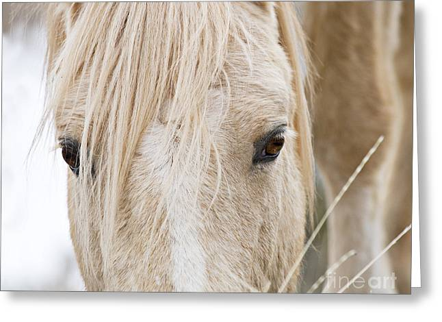 Wild Horses Greeting Cards - Clouds Eyes Greeting Card by Carol Walker