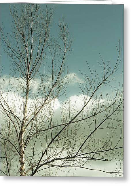 Cloudy Blue Sky Through Tree Top No 1 Greeting Card by Ben and Raisa Gertsberg