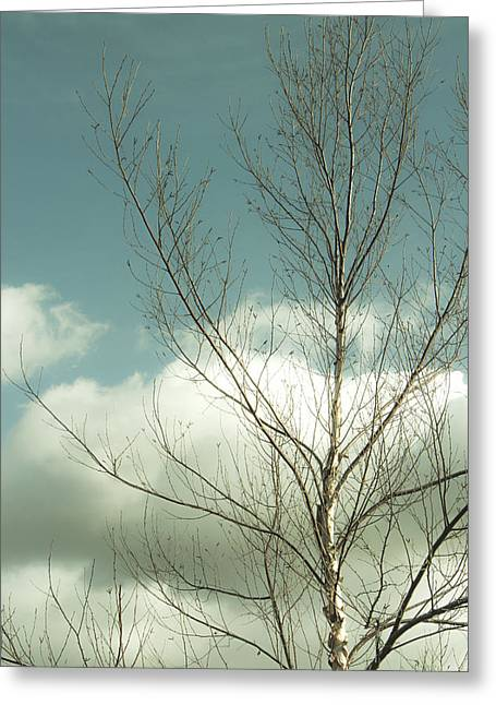 Cloudy Blue Sky Through Tree Top No 2 Greeting Card by Ben and Raisa Gertsberg