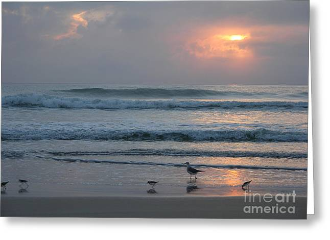 Seabirds Greeting Cards - Cloudy sunrise with seabirds Greeting Card by Julianne Felton