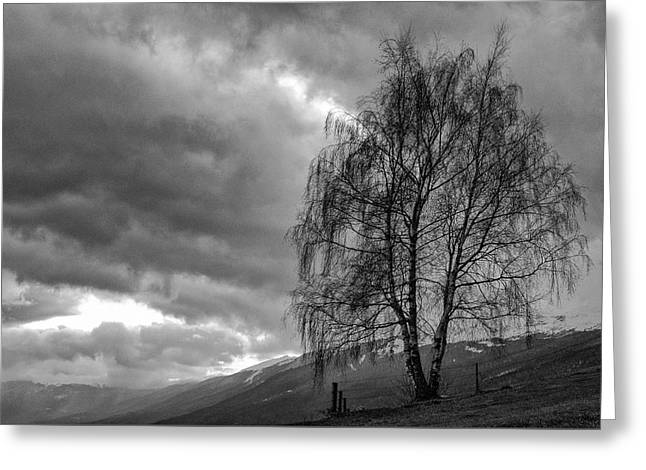 Winter Storm Greeting Cards - Cloudy tree Greeting Card by Cyril Chuteaux