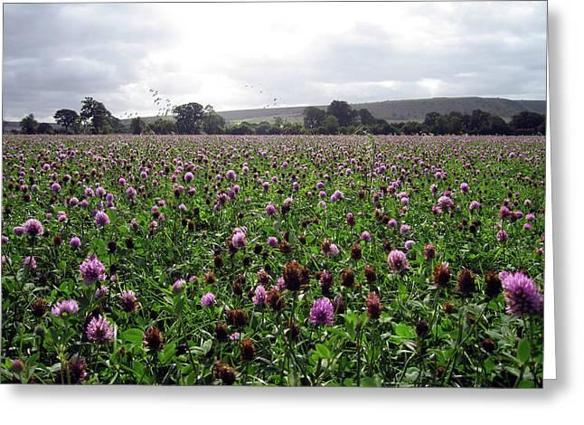 Clover Field Wiltshire England Greeting Card by Kurt Van Wagner