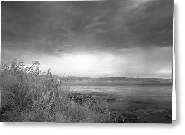 Randy Greeting Cards - Clover Point Greeting Card by Randy Wachtin