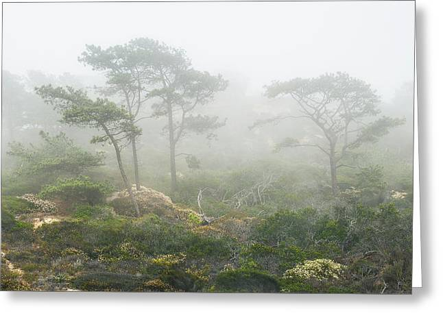 Torrey Pines Greeting Cards - Coastal Fog Greeting Card by Joseph Smith