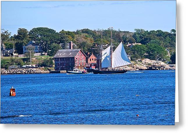 Tall Ship Greeting Cards - Coastal Schooner Greeting Card by Suzanne McDonald