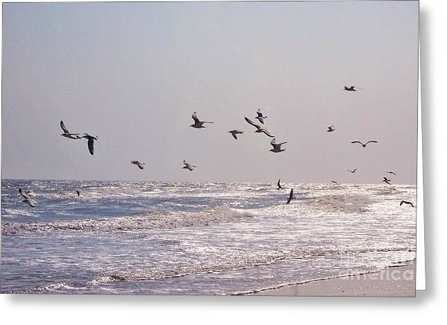 Flying Seagull Greeting Cards - Coastal Seagulls Greeting Card by Pele Cove Photography
