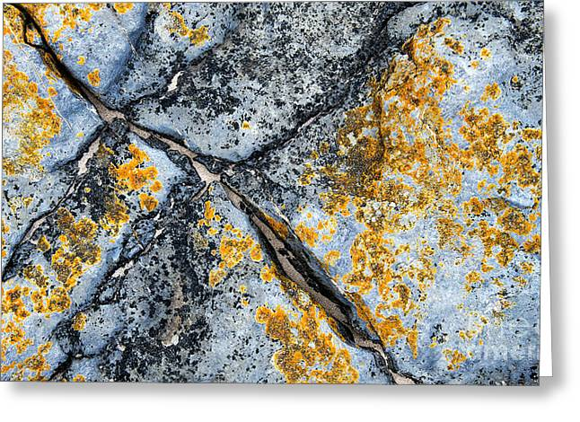 Geology Photographs Greeting Cards - Coastal Treasure Greeting Card by Tim Gainey