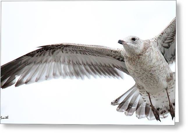 Flying Animal Greeting Cards - Coasting Greeting Card by Ed Smith