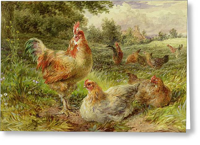 Cockerel Greeting Cards - Cochin China Fowls Greeting Card by George Hickin