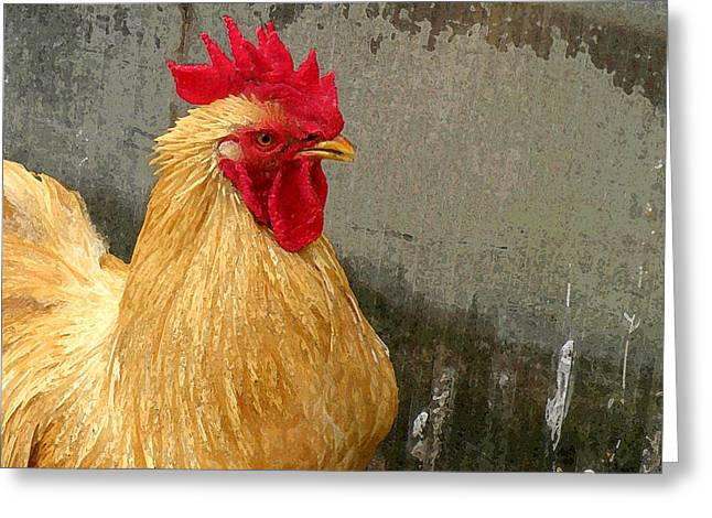 Nature Abstracts Greeting Cards - Cock of the Walk Greeting Card by Jean Hall