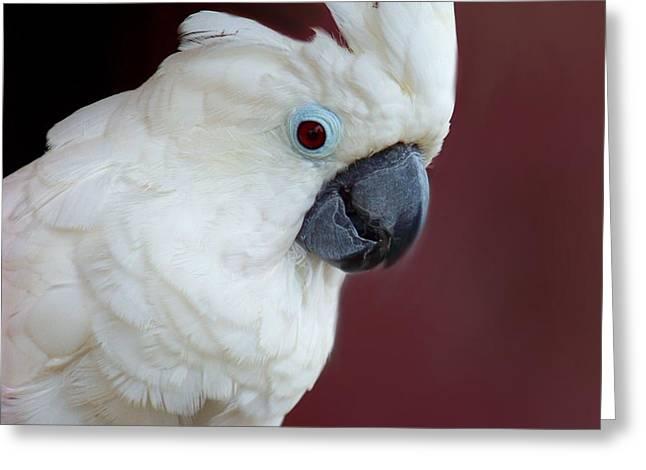 Cockatoo Portrait Greeting Card by Jai Johnson