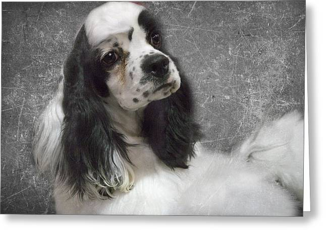 Cocker Spaniel Greeting Card by Rebecca Cozart