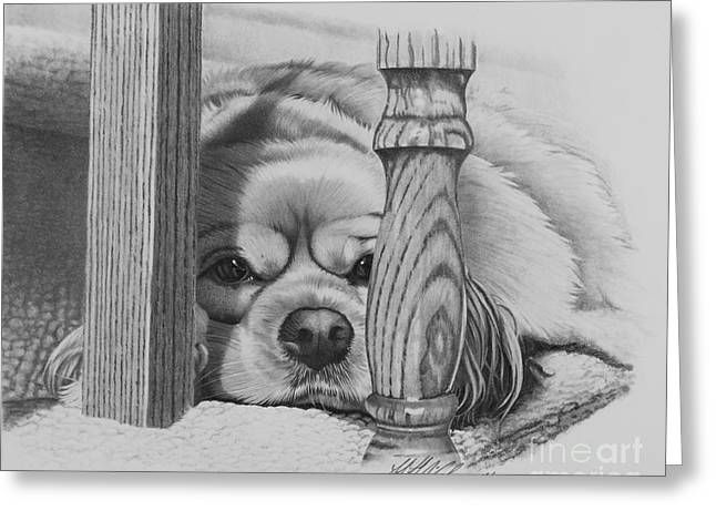 Spaniel Greeting Cards - Cocker Spaniel Greeting Card by Stephen McCall