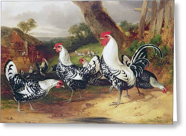 Cockerel Greeting Cards - Cockerels in a Landscape Greeting Card by William Joseph Shayer