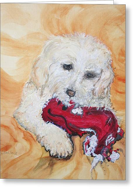 Toy Dog Greeting Cards - Coconut Bichon Poodle Mix Greeting Card by Sue Lovelace