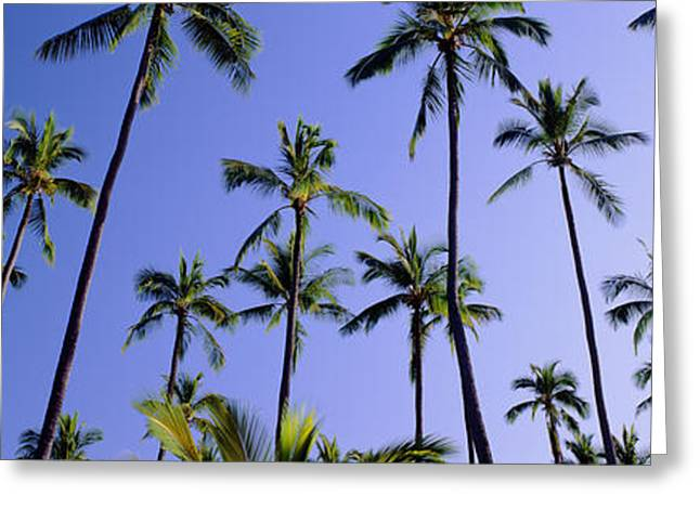 Thin Greeting Cards - Coconut grove at Wailua Greeting Card by Carl Shaneff - Printscapes