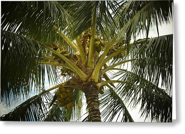 Coconut Palm Greeting Card by Frank Wilson