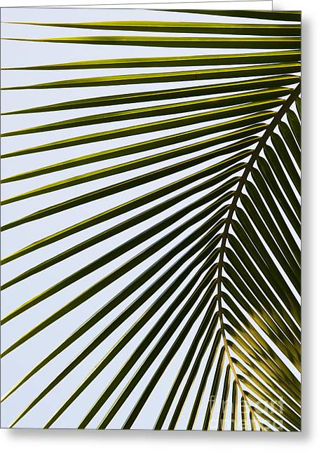 Coconut Palm Tree Greeting Cards - Coconut Palm Leaf Greeting Card by Tim Gainey