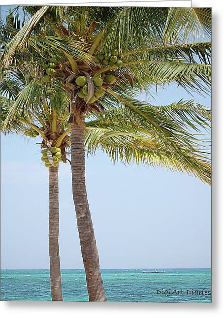 Cruise Vacation Greeting Cards - Coconut Palm Tango Greeting Card by DigiArt Diaries by Vicky B Fuller