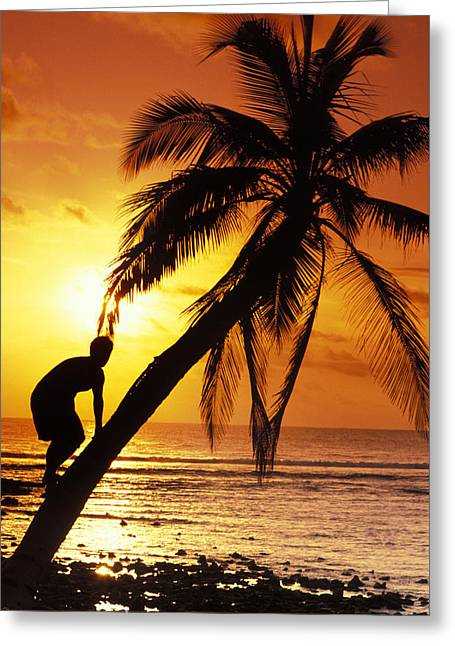 Tropical Beach Greeting Cards - Coconut Tree Climber Greeting Card by Sean Davey