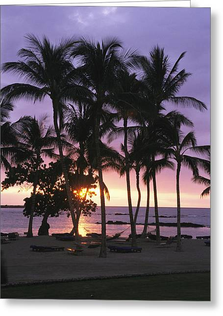 Solar Phenomena Greeting Cards - Coconut Trees Silhouetted On Mauna Lani Greeting Card by Richard Nowitz