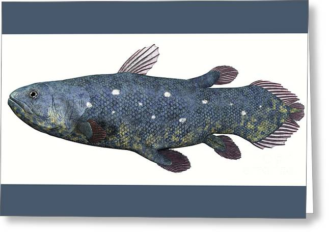 Sea Creature Pictures Greeting Cards - Coelacanth Fish over White Greeting Card by Corey Ford