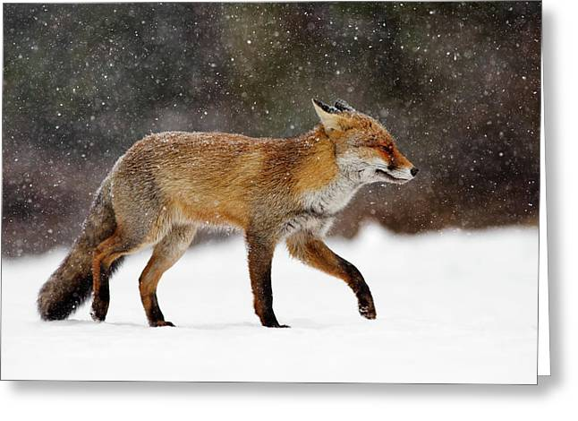 Cold As Ice - Red Fox In A Snow Blizzard Greeting Card by Roeselien Raimond