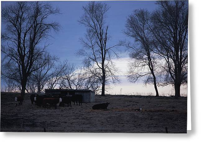 Cold Iowa Evening Greeting Card by Jame Hayes