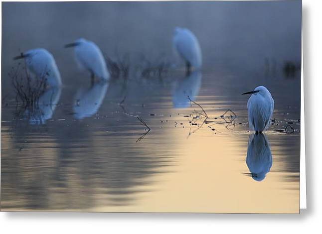 Egrets Greeting Cards - Cold Mirror Greeting Card by Weevil