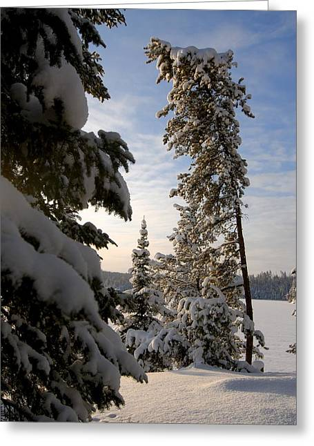 Boundary Waters Greeting Cards - Cold Morning on Boot Lake Greeting Card by Larry Ricker