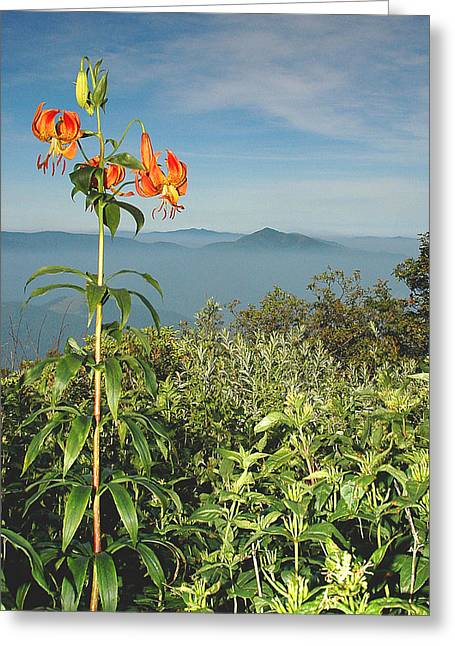 Cold Mtn. And Turk's Cap Lily Greeting Card by Alan Lenk