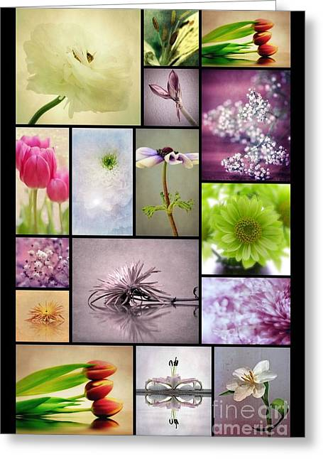 Macro Flower Photography Greeting Cards - Collage 1 Greeting Card by SK Pfphotography